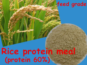 Rice Protein for Animal Feed Additive (protein 60%) pictures & photos