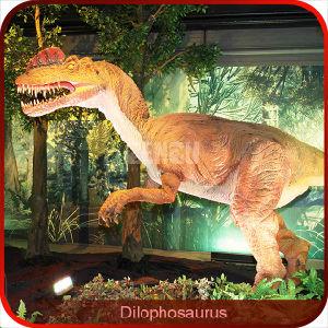 Showroom High Simulation Dinosaur Specimens pictures & photos
