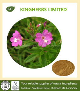 Epilobium Parviflorum Extract 4: 1, 10: 1, 20: 1 Small Flowered Willow-Herb Extract pictures & photos
