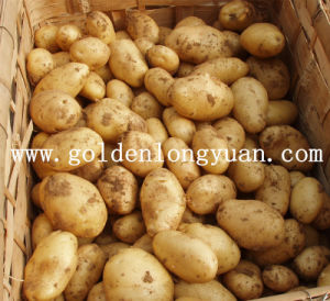 Chinese Fresh Potato in Good Quality pictures & photos