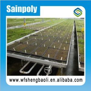 Good Quality Seedbed for Vegetables of Greenhouse pictures & photos