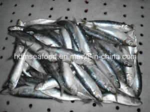 Whole Fround Frozen Sardine Fish (Sardinella aurita) pictures & photos