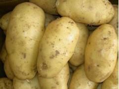Export Healthy Food Fresh Potato