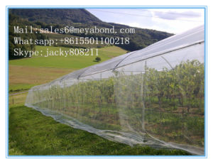 Anti Aphid Net 50X25 Mesh in South-American Markets for Long Lifetime pictures & photos