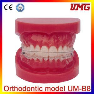 New Style School Educational Human Teeth and Dental Models pictures & photos