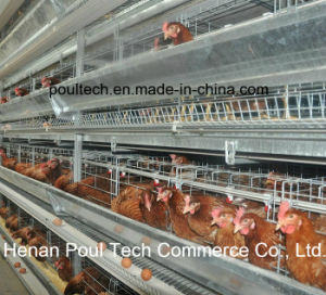 Automatic Layer Chicken Cage System (H frame) pictures & photos