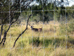 Stop Deer Fencing pictures & photos