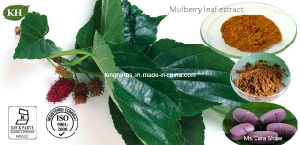 Mulberry Leaf Extract 1-Deoxynojirimycin (DNJ) 1% to 30% by HPLC pictures & photos