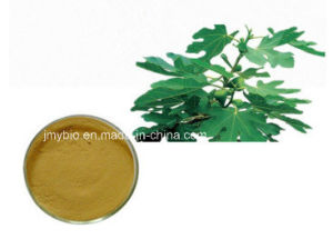 Herbal Fig Leaf Extract Fig Leaf Powder 10: 1 Flavones pictures & photos