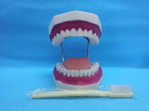 Middle Dental Care Model with Tongue&Tooth Brush pictures & photos