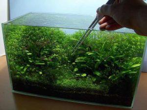 High Quality Clear Goldfish Aquarium pictures & photos