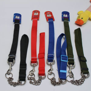 Nylon Training Pet Collar with Leash for Large Dog pictures & photos