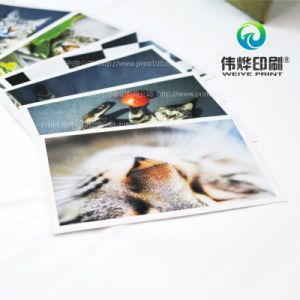 High Quality Postcard Printing From a Pet Cat pictures & photos