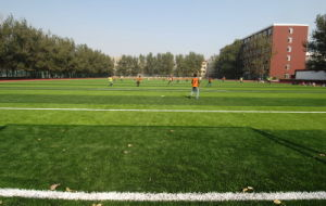 Artificial Turf for Football Field (50S68NK48G2)