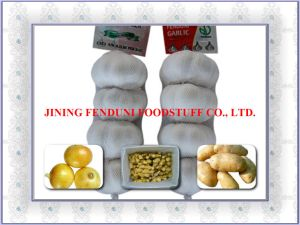 Jinxiang Garlic-from Garlic Hometown (F16-18)