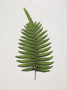 Wall-Mounted Resin Ancient Frond Leaf-Sample for Home Decoration / Hotel Decoration