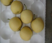 (32, 36.40, 44) Sweet Delicious Fresh Ya Pear pictures & photos