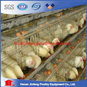 a-Type Layer Breeder Broiler Chicken Cages pictures & photos