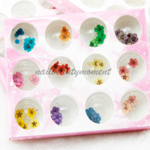 Art Nail Manicure Dried Flowers Decoration Beauty Products Kit (D55) pictures & photos