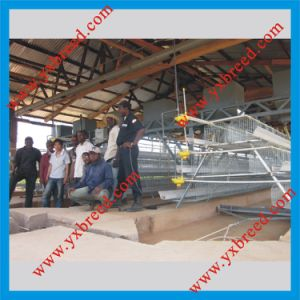 Nigeria Type Layer Battery Cage pictures & photos