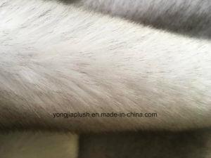 Silver Grey Snow Fox pictures & photos
