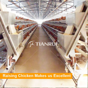 Tianrui A Type automatic egg chicken layer cage feeding system pictures & photos