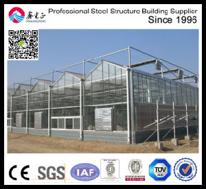 Vegetable Glass Greenhouse pictures & photos
