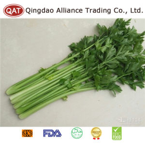 Frozen IQF Diced Celery with High Quality pictures & photos