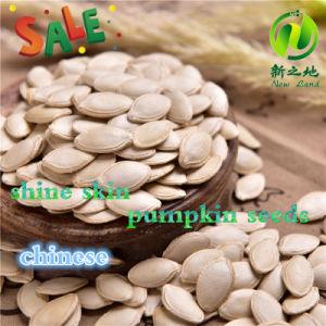 Chinese Shine Skin Pumpkin Seeds 8-11mm