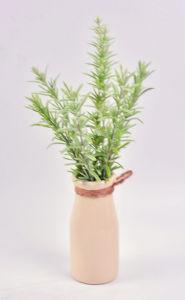 Various Herbs Plant (Thyme/Long Grass/Money Leaves) in Milk Bottle