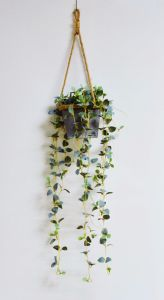Mini Heart Shape Leaves in Paper Mache Pot with Hanging pictures & photos