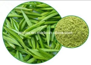 Hot Sell Herbal Extract /Green Tea Extract EGCG and Tea Polyphenols pictures & photos
