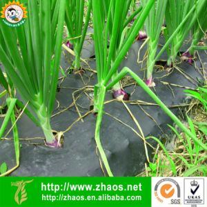 Direct Manufacturer PE Black Agriculture Mulch Film with UV Resistant pictures & photos