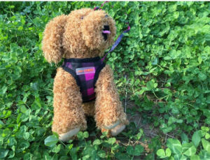 Comfortable Pink Dog Leather Harness Manufacturers pictures & photos