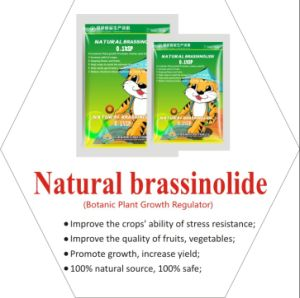 Brassinolide 90% pictures & photos