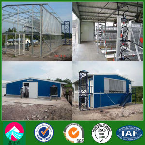 Angola Poultry Farm Chicken Shed Project (XGZ-PH009) pictures & photos