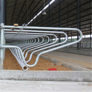 Single Row Type Cow Free Stall with Hot Galvanized Steel Pipe pictures & photos