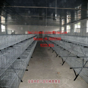 Industrial Steel Poultry Cage for Laying Broiler Chick Rabbit Dog