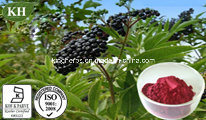Natural Organic Elderberry Extract Anthocyanidins 3% to 25%; Anthocyanins 5%-20% pictures & photos