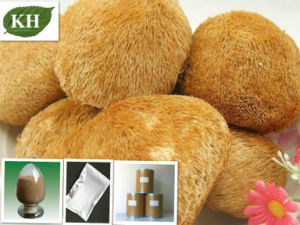 Hericium Erinaceus Powder/Hericium Erinaceus Powder Extract/Pure Hericium Erinaceus Powder pictures & photos