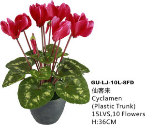 Artificial Flowers of Cyclamen Gu-Lj-10L-8fa pictures & photos