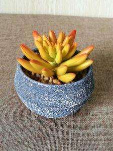 Artificial Plants and Flowers of Succulent Plant Gu-Sc008 pictures & photos