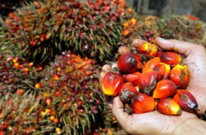Indonesia Palm Oil Palm Fatty Acid Distillate Pfad in Drum pictures & photos
