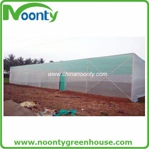 Simple Insect Proof House, Greenhouse, Green House pictures & photos
