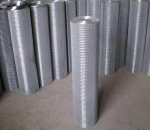 Galvanized Welded Wire Mesh/Galvanized Welded Wire Mesh Panel pictures & photos