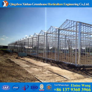Promotion Multispan Hydroponics Glass Agricultural Green House for Cucumber pictures & photos