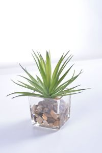 Sword Grass Plant in Glass with Faux Water and Rock pictures & photos
