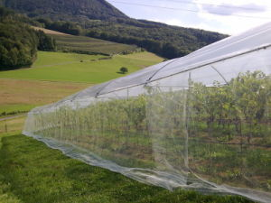 100% Virgin HDPE Insect Net (50*25) pictures & photos