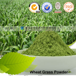Health Benefits Extract Manufacturer Cost-Effective Wheat Grass Powder pictures & photos