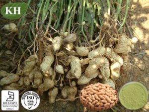 100% Natural Peanut Peanut Shell Extract: 98% Luteolin pictures & photos